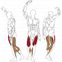BH FITNESS L020 LEG EXTENSION / LEG CURL Svalové partie