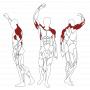 BH FITNESS L090 svalové partie