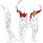 BH FITNESS L080 svalové partie