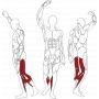 BH FITNESS L210 SEATED CALF svalové partie